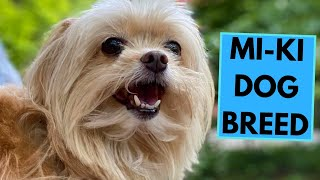 MiKi Dog Breed  TOP 10 Interesting Facts