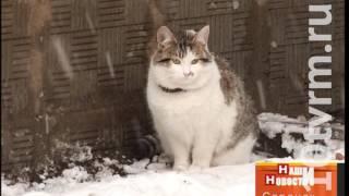 В Саранске коммунальные службы «замуровывают» кошек