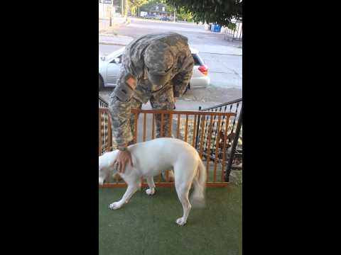 Soldier welcomed home by happy dog! Drill Weekend