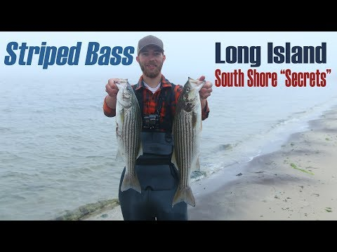 Foggy Morning Catching Striped Bass  Long Island South Shore June 2019