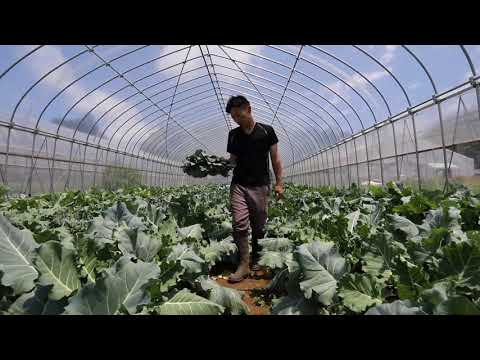 Lonely furrow: Little pay dirt for organic farming in Japan