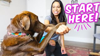 10 EASY DOG TRICKS IN 10 MINS  Promise, they're easier than you think