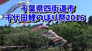 千葉県四街道市 千代田鯉のぼり祭り 2016-5-4