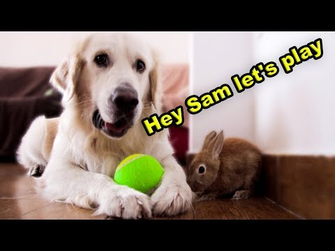 Dog Wants to Play with Rabbit
