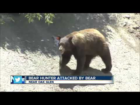 Hunter attacked by bear he thought he killed