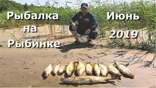 Рыбалка на рыбинке ,  клев судака в июне !!!