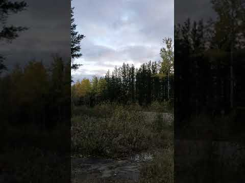 Frankie and Jess - Strange noises heard in the woods in Ontario (VIDEO)