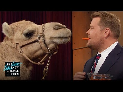 Porcupine, Armadillo & a Camel w/ Jack Hanna, Lucy Liu & Terry Crews