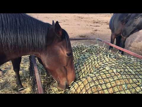 Fatigue Feeding Slow Feeding Horses Hay Nets