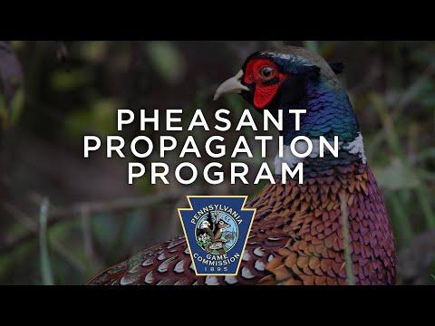 Pheasant Propagation Program - Through the Year