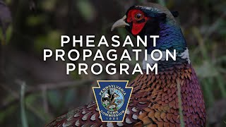 Pheasant Propagation Program - Through the Year