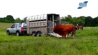 Nakládání býka do vleku Ifor Williams TA510