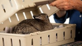 Best Carrier for a Rabbit | Pet Rabbits