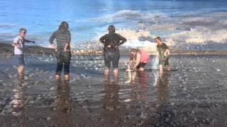 Maltese Learns To Swim