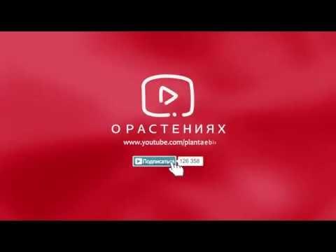 Татьяна Ильина: Лекарственные растения. Большая