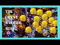 EXPLORING The GREAT BARRIER REEF, fantastic UNDERWATER VIDEOS (Australia)