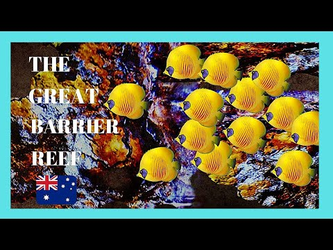 Great barrier reef pictures hd
