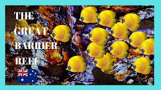 The GREAT BARRIER REEF, fantastic UNDERWATER VIDEOS, Queensland (Australia)