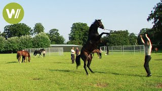 Horses - the fastest and most expensive horses in the world (animal documentary in HD )