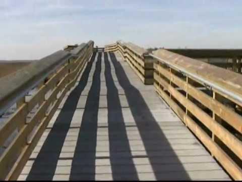 Observation Point Marsh Boardwalk at Blackwater NWR