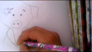 Blue Nose pig