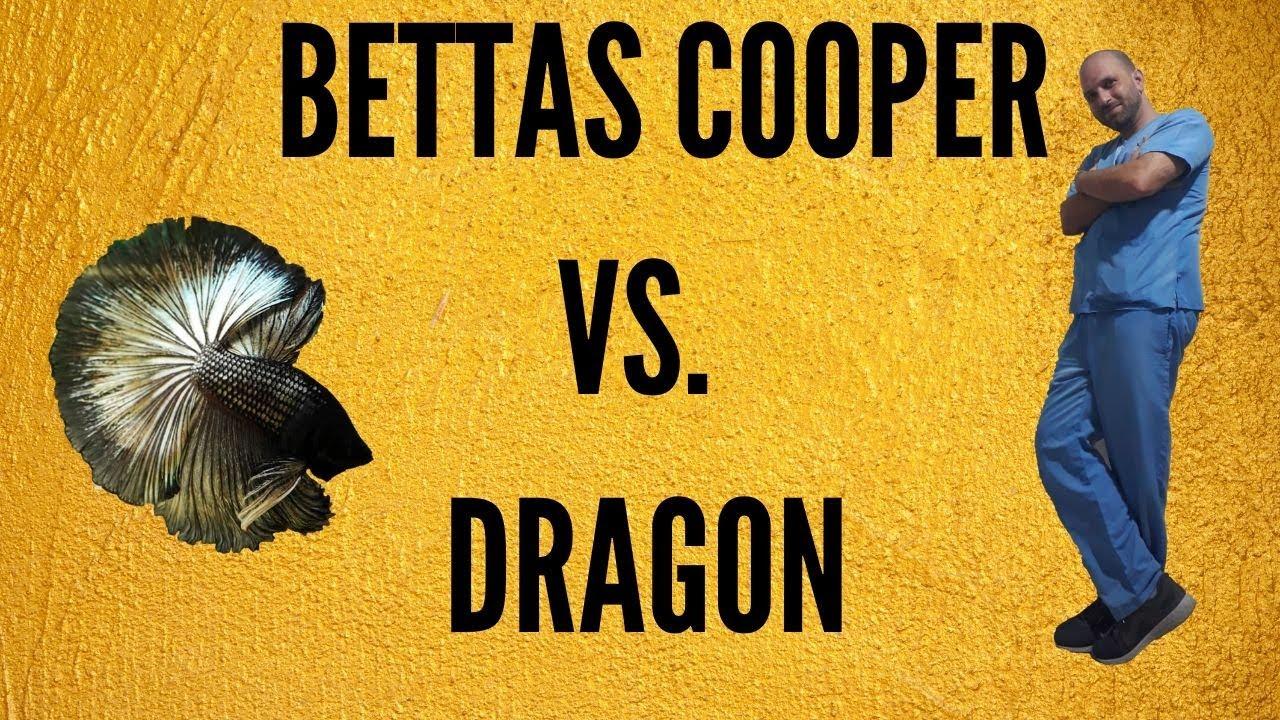 BETTAS COOPER VS DRAGON