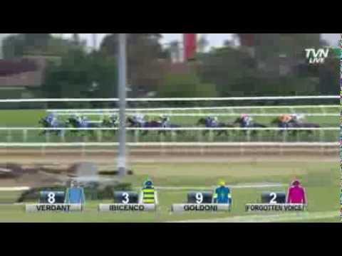 Geelong Cup 2013
