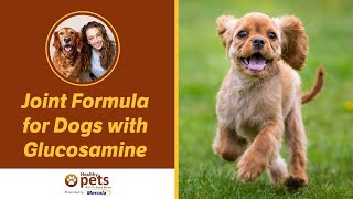 Joint Formula for Dogs with Glucosamine