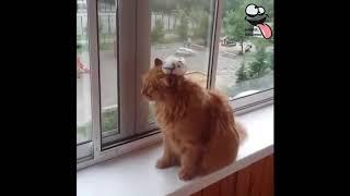 Gel Kulağına Birşey diyeceğim | Hayvanlar Alemi