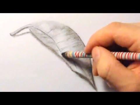 Blatt, zeichnen im Zeitraffer (Leaf, drawing in fast motion)[HD]