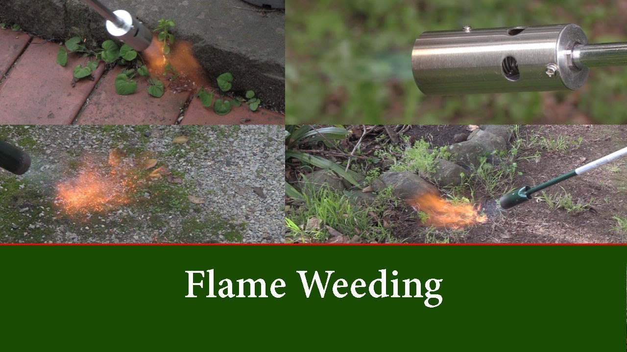 Flame Weeding Comparing The Weed Dragon And The Hot Devil Gas Flame Weeders Youtube