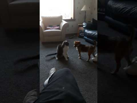 Fighting like cat and dog