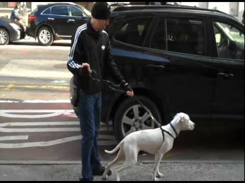 leash-walking-#-1---less-stress-more-success