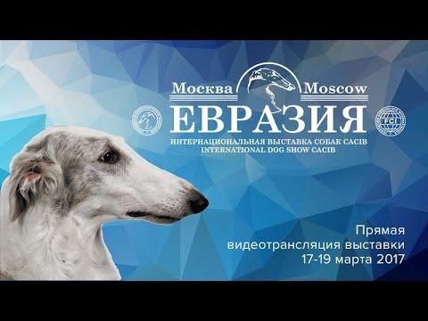 Евразия 2017 (день 3)
