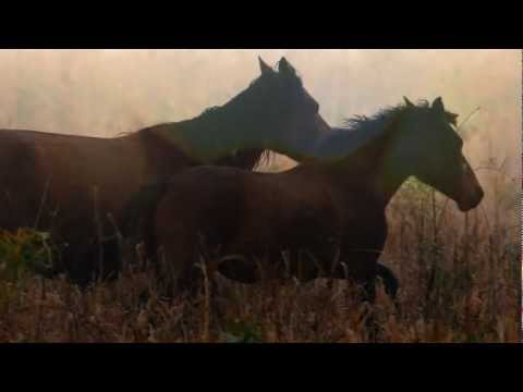 Mihai VASILE - WILD HORSES IN THE DANUBE DELTA SAVED BY FOUR PAWS