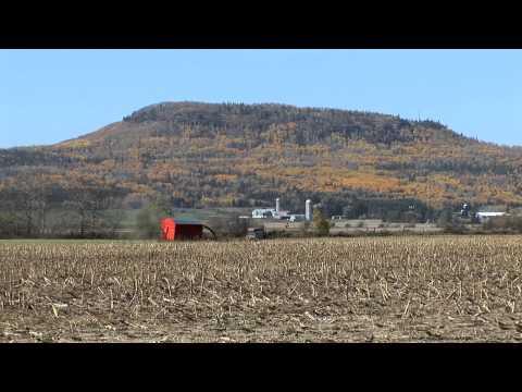 OFA Biomass: Purpose Grown Energy Crops