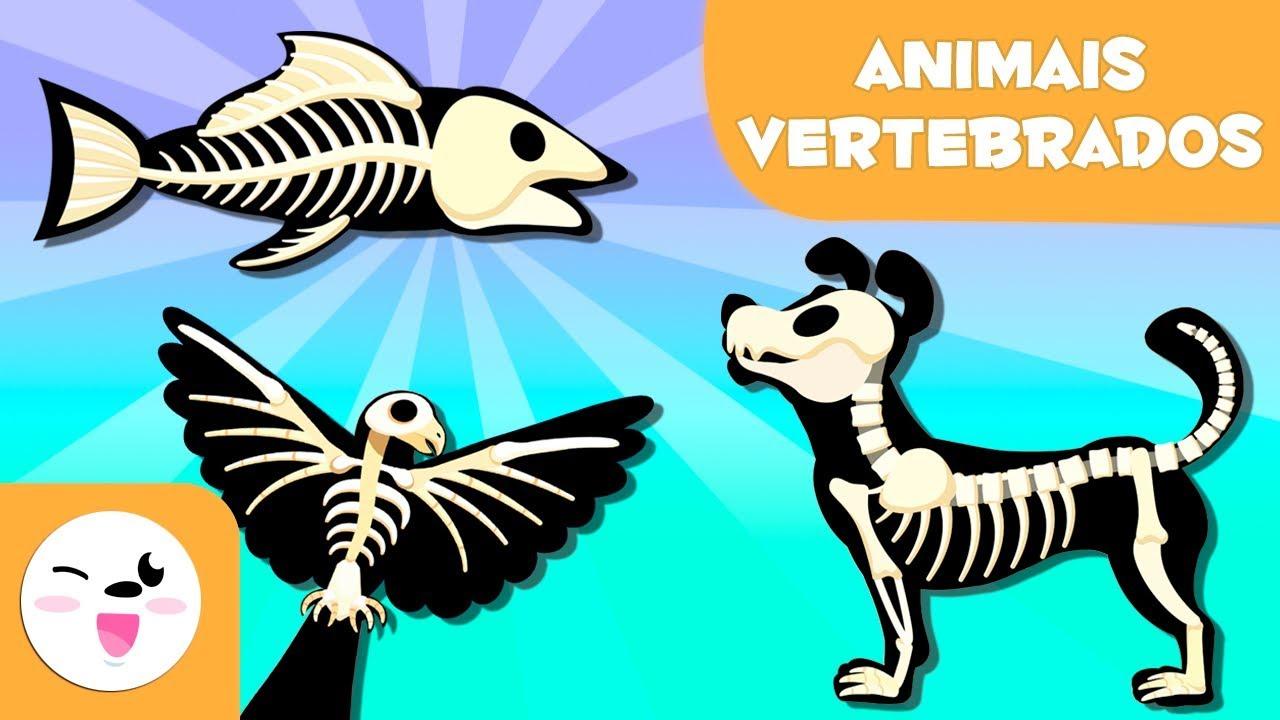 Animais Vertebrados Para Criancas Mamiferos Aves Repteis