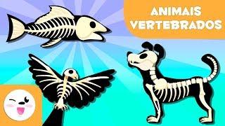 ANIMAIS VERTEBRADOS para crianças - Mamíferos, aves, répteis, peixes e anfíbios