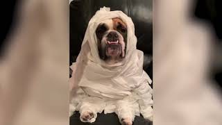 The best collections of videos about animals in 2018 Funny videos of domestic cats and dogs of 2018
