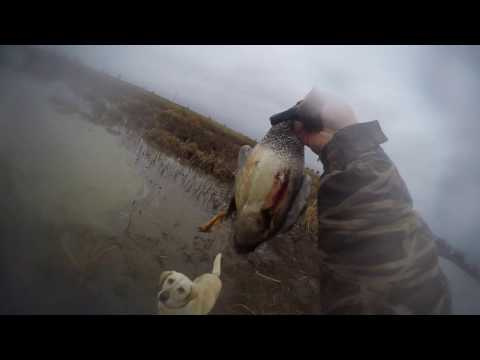 Duck Hunting Sacramento National Wildlife Refuge 01-06-2016