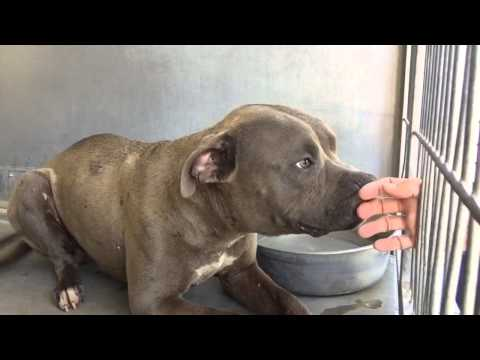 A483995 CRUZ at San Bernardino City Shelter Must watch to the end!