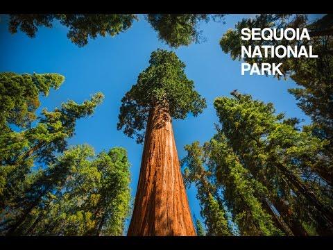 SEQUOIA National Park - California - Estados Unidos