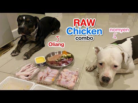 pit-bull-dogs-eat-raw-chicken-combo+quail-with-turmeric-yogurt-[asmr]-barf- -mukbang-犬が生の肉を食べる- -4k