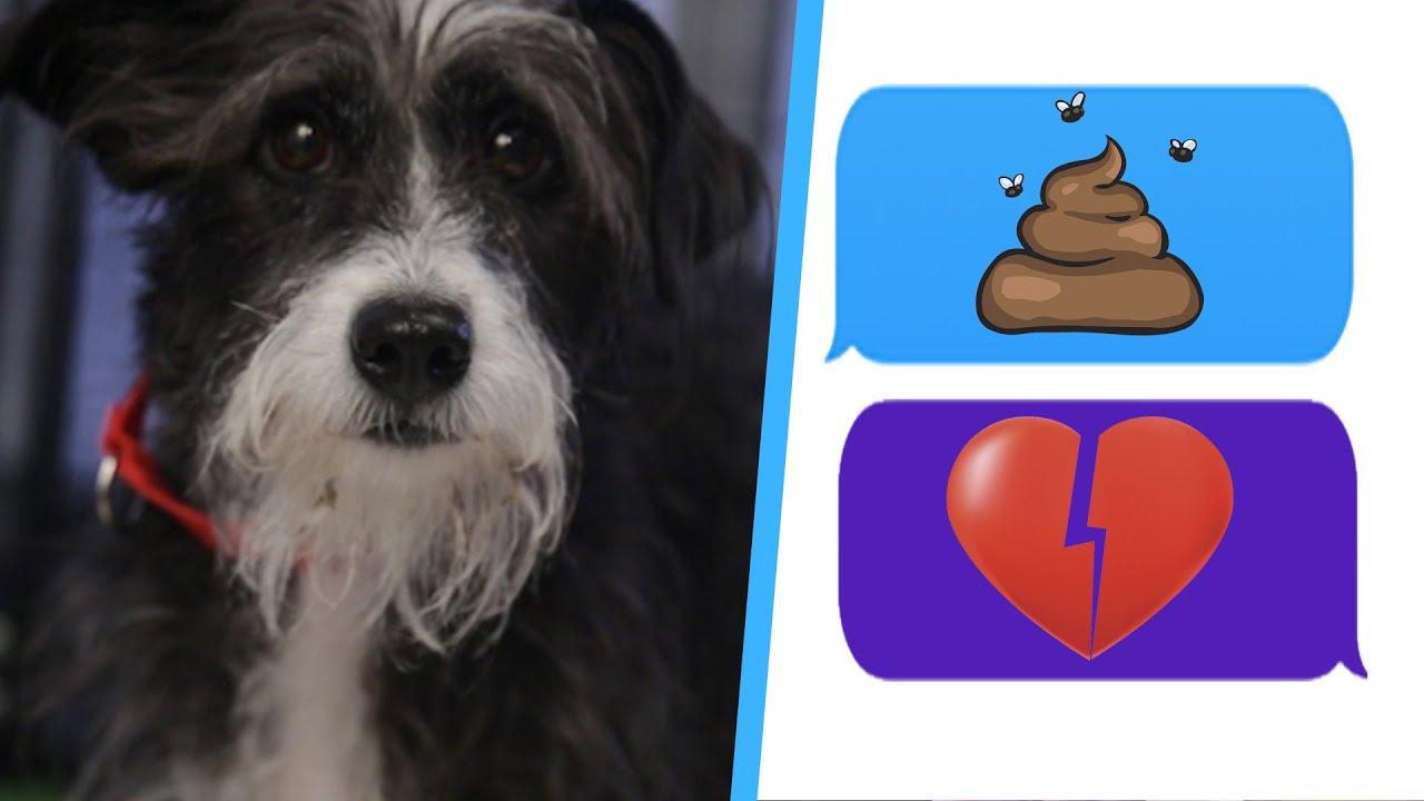 singles dog forum dating