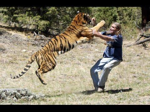 때 호랑이와 사자