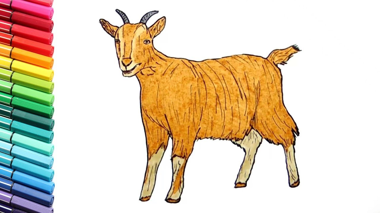 Drawing and Coloring a Goat Learning