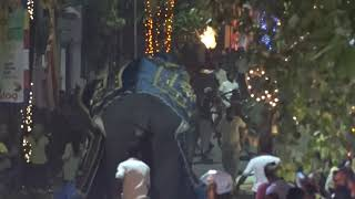 Watch: 17 hurt as elephants run amok during Sri Lanka parade