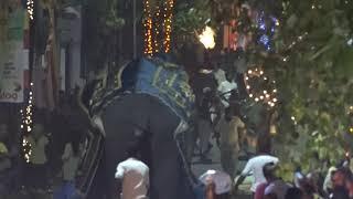 Watch: 17 hurt as elephants run amok during Sri Lanka parade
