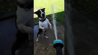 Pepperjack with the hose