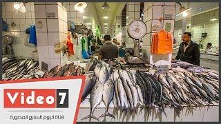 التجار: إيقاف التصدير خفض سعر السمك و